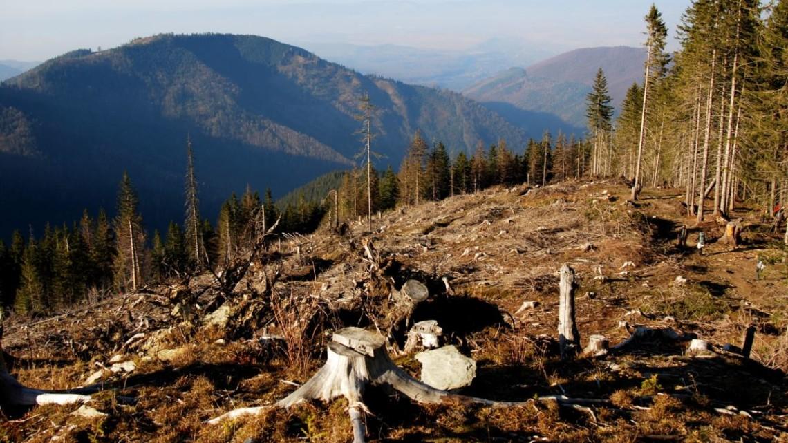 За процесуального керівництва Іршавського відділу Хустської місцевої прокуратури до суду направлено обвинувальний акт стосовно закарпатця за фактом незаконної порубки лісу, вчиненої повторно.