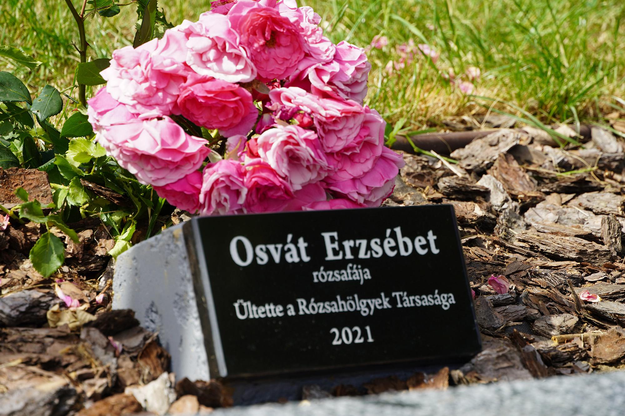 У парку «Будапешт» м. Берегова 24 червня урочисто відкрили іменну пам'ятну дошку угорській поетесі Ержебет Ошват, а також висадили кущ троянд.