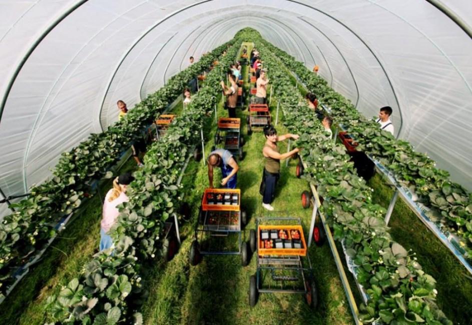 Українські сезонні працівники в Польщі зможуть почати працювати без дотримання двотижневого карантину.