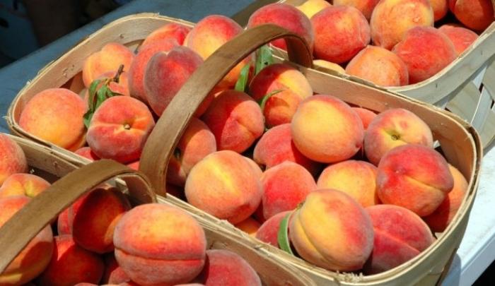 Село давно відоме щедрими врожаями цих плодів. Його мешканці прагнуть увіковічнити жовтогарячі фрукти уже традиційним фестом.