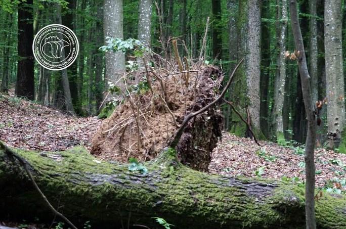 Сильные ветры и дожди, что прошли Хустщиною, нанесли непоправимый ущерб не только зданиям, но и лесным массивам.