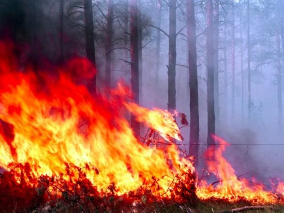 Прокурором Перечинського відділу Ужгородської місцевої прокуратури скеровано до суду обвинувальний акт щодо 22-річного юнака, який підпалив суху траву на прилісовій ділянці.
