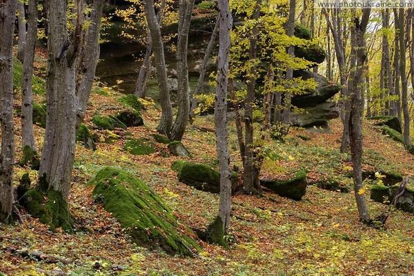 Лісові масиви Закарпаття посідають перше місце серед лісового фонду України.