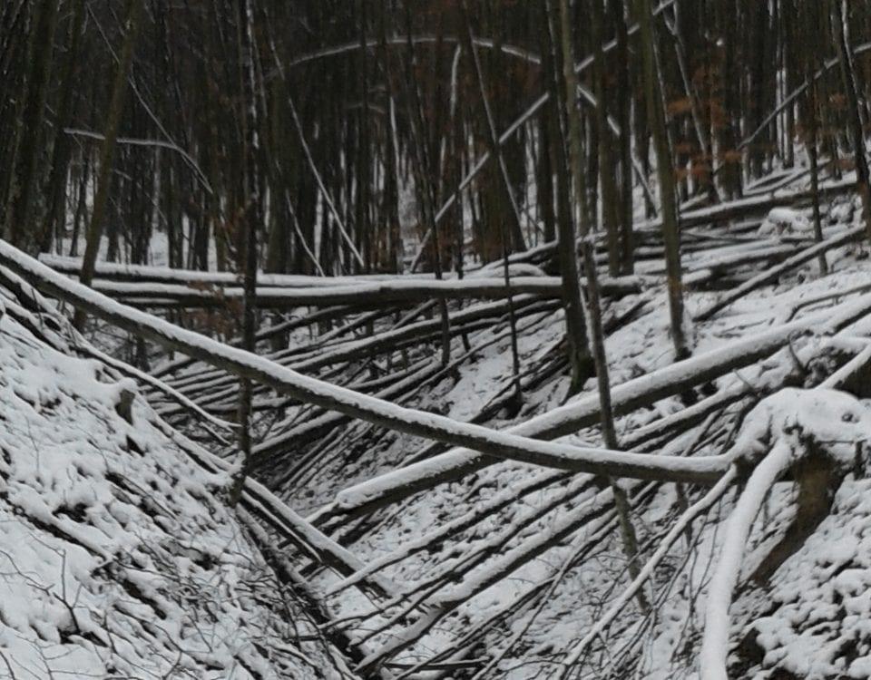 Комісія, створена в Управлінні Держпраці у Закарпатській області, завершила спеціальне розслідування нещасного випадку зі смертельним наслідком.
