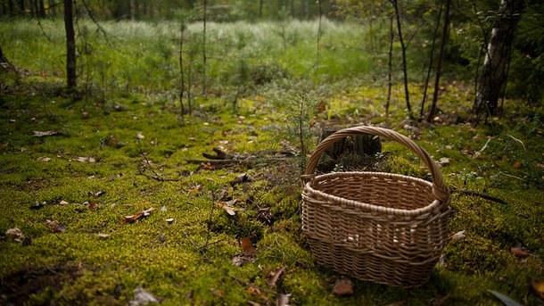 27 жовтня продовжувались пошуки громадянина 1930 р.н., який 24 жовтня пішов у лісовий масив по гриби у с. Нижнє Селище Хустського району та не повернувся додому.