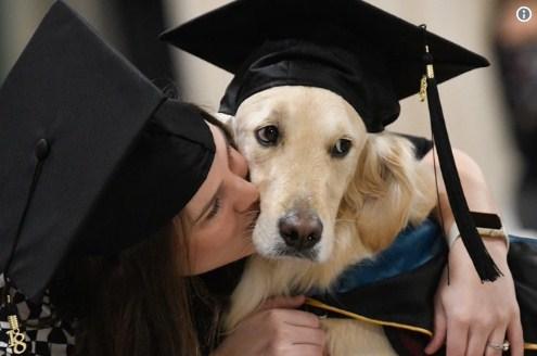 В Америці собака-поводир отримав диплом магістра разом зі своєю власницею