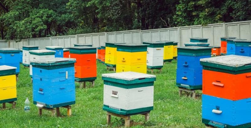 У рамках проекту «Карпатська бджола» у с. Колочава відкриють атракційну пасіку та розроблять туристичний маршрут «Колочавські медові стежки»