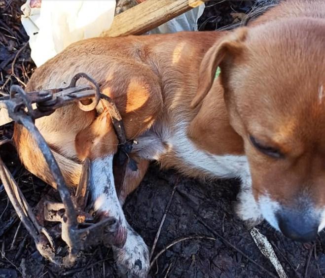 Ужгородка Уляна Мельник висловила своє обурення в одній із місцевих спільнот зоозахисту.