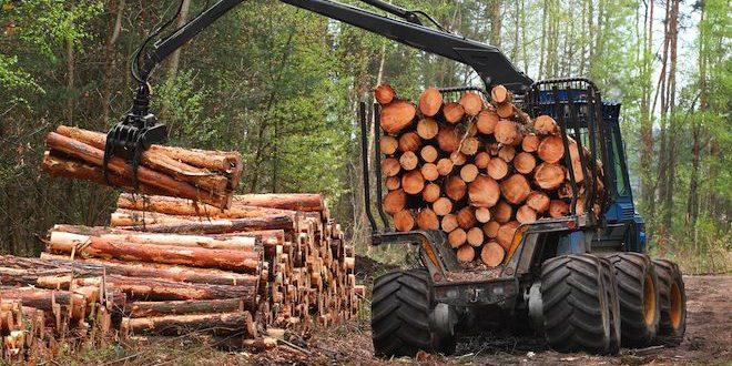 Розблокування експорту деревини не несе значних загроз лісовому фонду України, запевняють у Держлісагентстві.