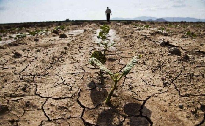 Аграрії ще ніколи так не чекали дощів, як зараз. 2020 рік виявився для них справжнім випробуванням. Що відбувається на півдні України, і якими можуть бути наслідки аномальної погоди для країни?