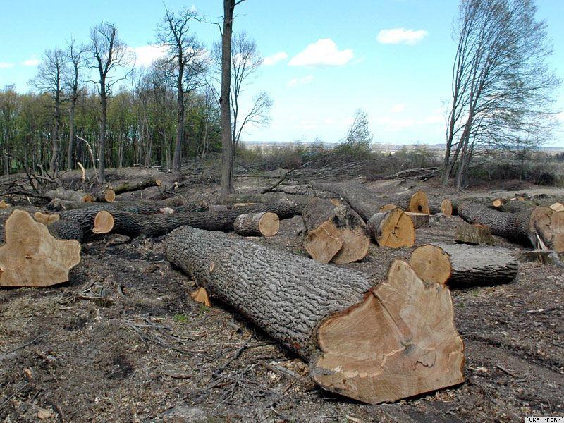 Володимир Арешонков проти незаконної вирубки  лісових масивів цінних порід дерев