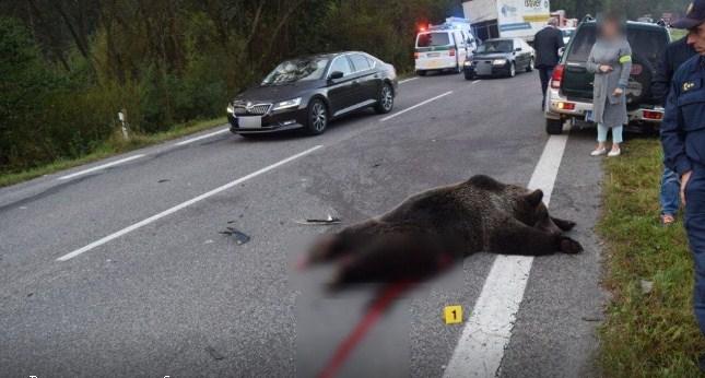 Смертельна ДТП в Словаччині: авто врізалось у ведмедя (ФОТО)