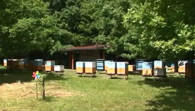 Бджола карпатка користується найбільшим попитом, адже легко адаптується до умов існування, навіть у Канаді.