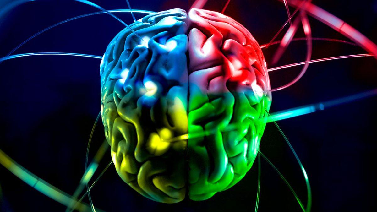 Вчені розповіли, як відрізняється мозок жінки і чоловіка, та які відмінності у мисленні