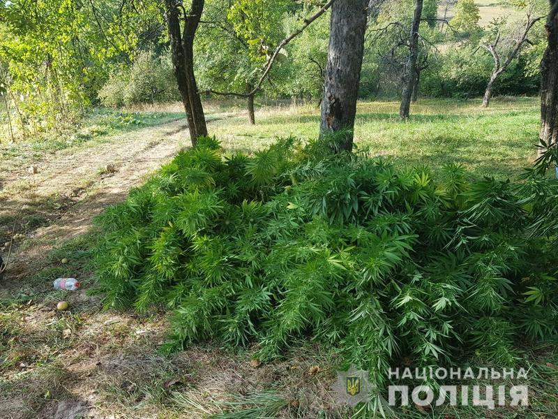 Поліцейські, отримавши інформацію щодо вирощування наркотичних рослин, здійснили ряд оперативно-профілактичних заходів щодо виявлення даного дворогосподарства та посіву коноплі.