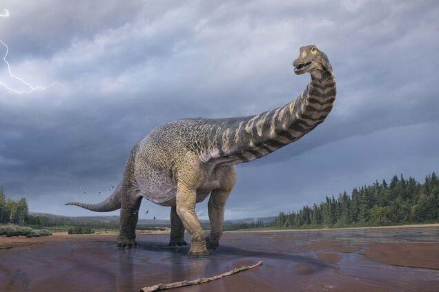 Розміри знайдених останків вражають, адже вчені стверджують, що Титанозавр був ростом до 6,5 м і завдовжки 30 м.