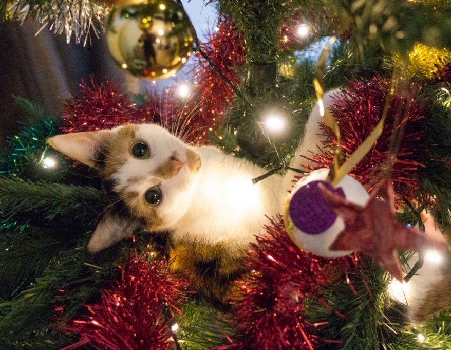 У Мережі набирає популярність курйозне відео протистояння цікавого кота і різдвяної ялинки.