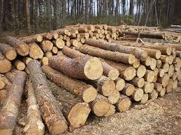 За порубку дерев у природно-заповідному фонді судитимуть 42-річного закарпатця.