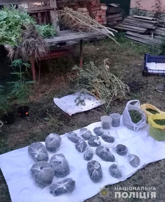Слідчі поліції Хуста відкрили кримінальне провадження за фактом незаконного зберігання наркотичних речовин у великих розмірах. У фігуранта вилучили рослини коноплі та два кілограми марихуани.