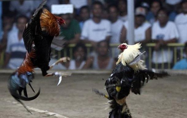 Во время облавы на организаторов незаконных драк одна из птиц напала на полицейского и лезвие, прикрепленное к его лапе, перерезала фемвовую артерию. Спасти мужчину не удалось.