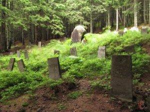 У селі Малий Раковець, що на Іршавщині (тепер Хустський район), на старому кладовищі люди збирають гриби.