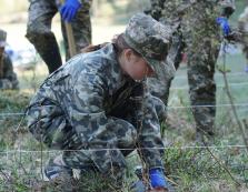 У лісах Свалявщини висадили 2100 саджанців