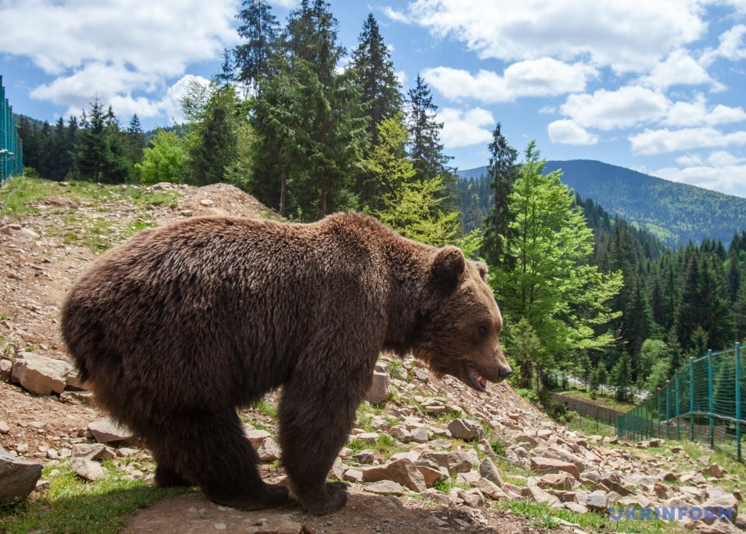 Поряд з мамою: ведмеді НПП