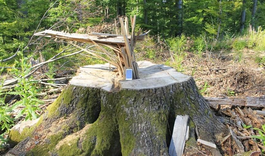Лісгосп на Свалявщині має можливість сплатити збитки добровільно в іншому випадку Державна екологічна інспекція звернеться до суду.