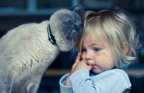 Коли жінка через деякий час підійшла до дитини, з візка вистрибнув кіт, а її дочка була без ознак життя.