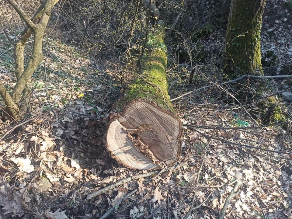 Вчора, о 16:30, поліцейські отримали повідомлення від працівника лісового господарства в смт Чинадієво, що на Мукачівщині.
