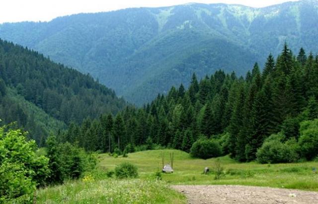 Майже 70 млн грн податків за користування лісовими ресурсами Закарпаття протягом 2020 року поповнили державний та місцевий бюджети.