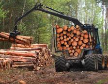 Врятувати ліси Карпат
