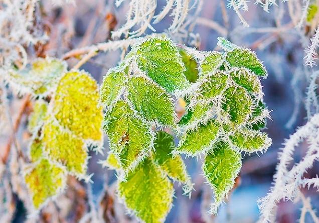 Ніч проти понеділка, 23 березня, виявилася в Чехії незвично холодною.
