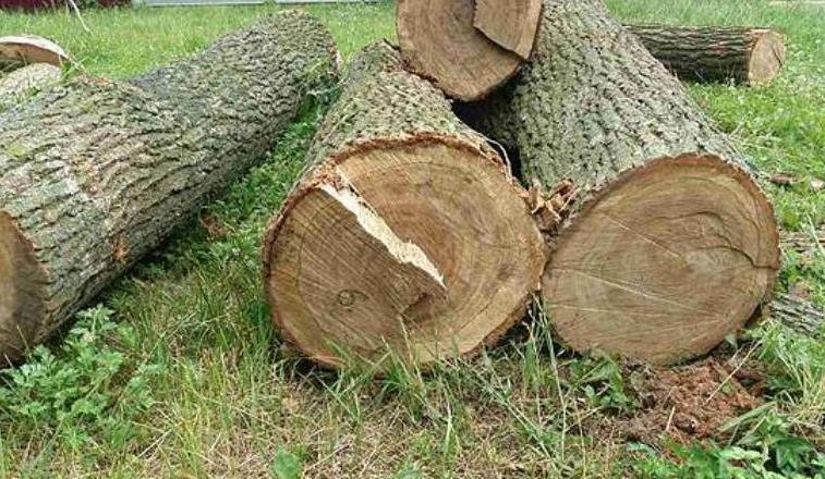 Мешканець Міжгірщини відшкодує нанесену лісу рубкою дерев шкоду у 62 тис грн у повному обсязі