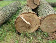 Мешканець Міжгірщини відшкодує нанесену лісу рубкою дере шкоду у 62 тис грн у повному обсязі