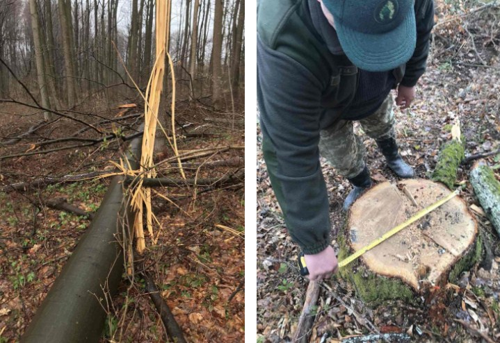 Значні порушення Лісового Кодексу України виявила Державна екологічна інспекція у Закарпатській області під час планової перевірки ДП «Ужгородське ЛГ».