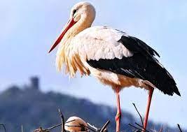 Повертати у гніздо лелеченя волонтери не зважились, адже це могло зашкодити птахові.