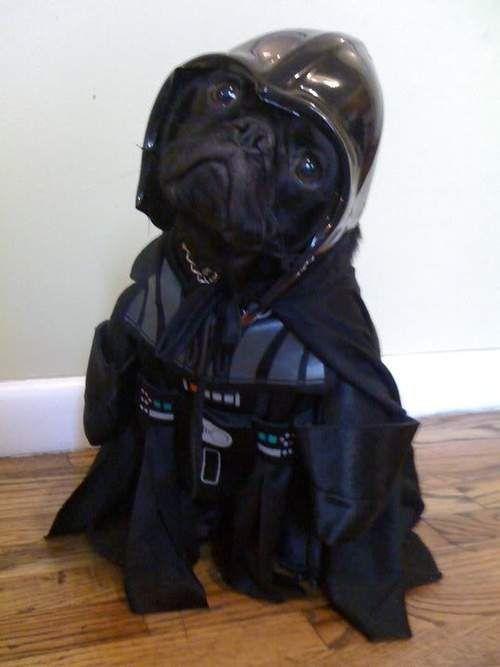 Реакція собаки розсмішила весь інтернет.