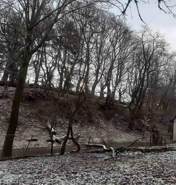 Йдеться про одну із вулиць на Перечинщині в селі Зарічево, де за словами людей, у будь-яку мить аварійні дерева можуть завдати жителям великої шкоди.
