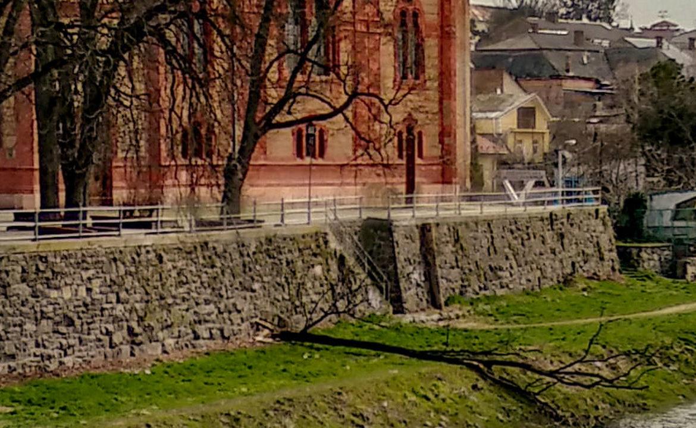 В Ужгороді сильний вітер зламав величезну гілку старого дерева.