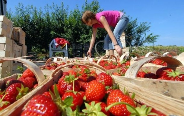 Коронавірус в українців виявили на овочевій фермі в гміні Суш, яка розташована у Вармінсько-Мазурському воєводстві.