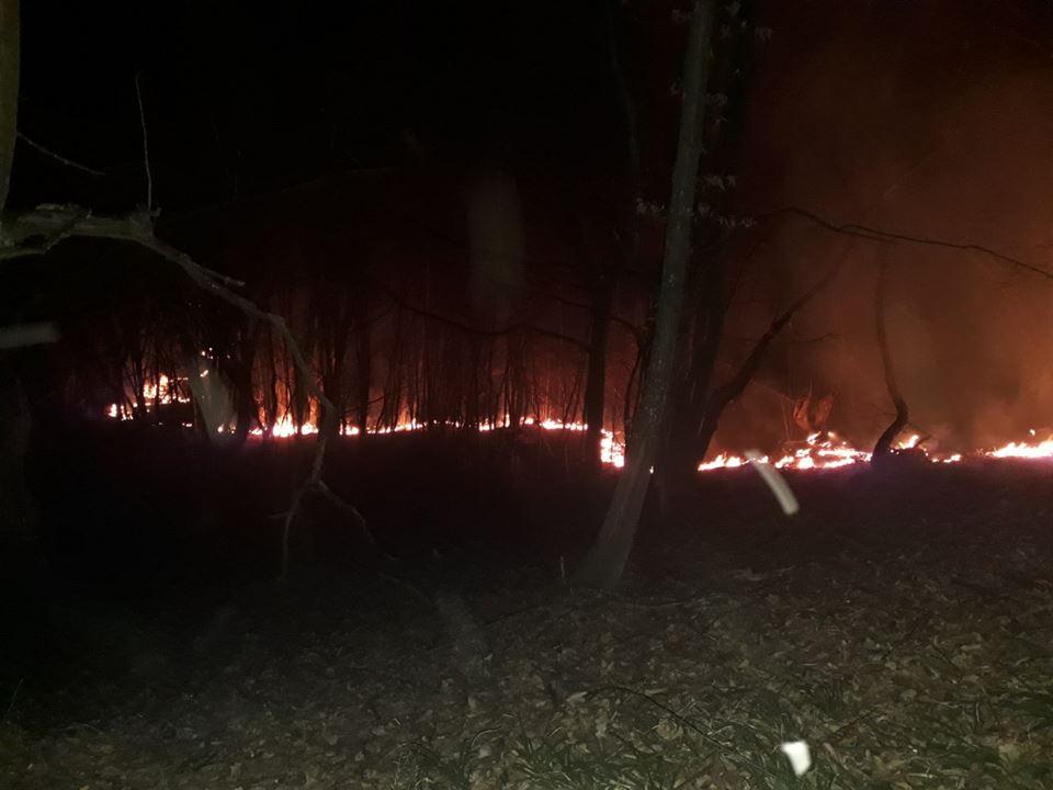 Перечинські лісівники обмежують доступ до лісу під час пожежонебезпечного періоду