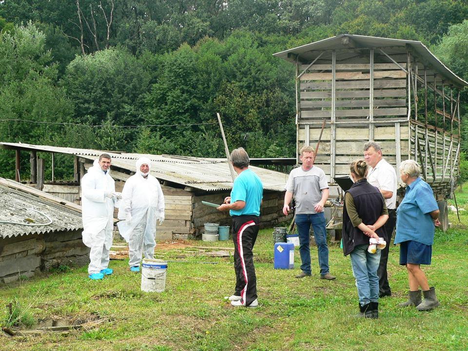 У мукачівському селі Павшино зафіксовано випадок падежу свійської свині. Чума?