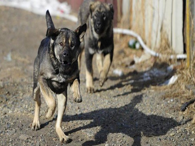 Напад собак відбувся на вулиці Тюльпанів.