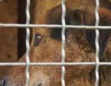 На Мукачівщині домашній пес накинувся на господаря та пошматував йому ногу