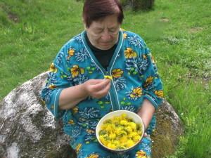 Весняні квіти жовтого кольору – кульбабу — газдині застосовують у готуванні ароматного меду
