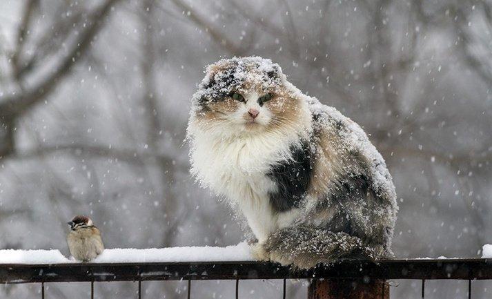 Температура повітря вночі 2-7° морозу, вдень 4° морозу - 1° тепла.