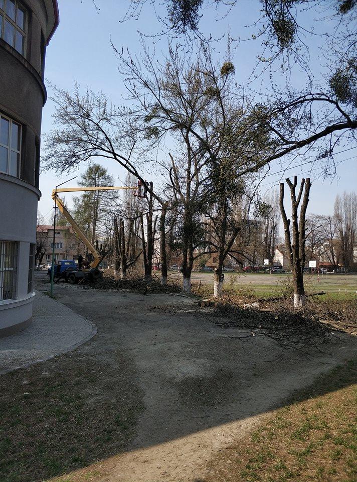 Сьогодні громадськість обурила робота комунальників по обрізці дерев.
