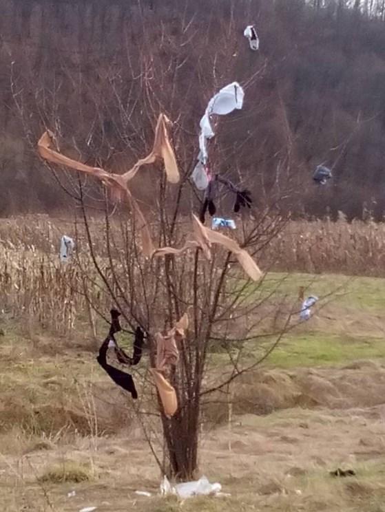 """На в'їзді в село Данилово на Хустщині можна побачити """"сміттєве деревце"""" – соцмережі"""