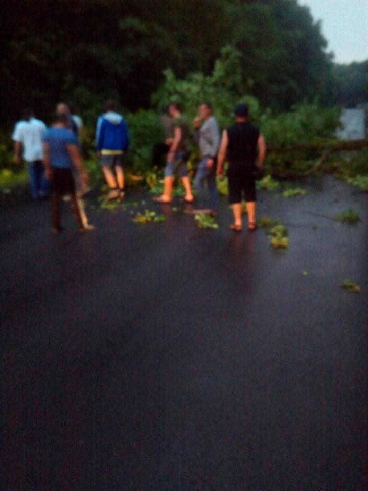 Дорога на Берегово перекрита, упало дерево